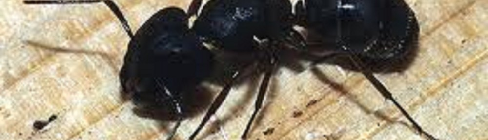 Seattle Pest exterminators